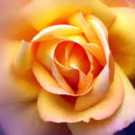 FleursWEB